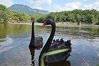 Продаётся озеро с участком земли, в Крыму
